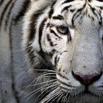 Un count down per salvare le specie in via d'estinzione. Con risvolti controversi