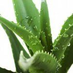 Aloe e dieta vegetariana: un connubio per sconfiggere il cancro?