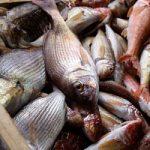 I pescatori diventano i 'guardiani' del mare. E la sostenibilita' ambientale si traduce in economia