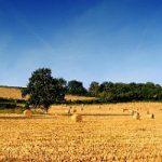 Agricoltura italiana dimenticata e sottovalutata
