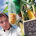 Dall'agricoltura alla biomedicina. A che punto e' il dibattito sugli Ogm