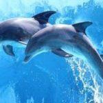 Scoperta in Australia una nuova specie di delfini