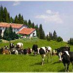 Agriturismi, gli italiani vogliono la natura e anche... la tecnologia
