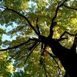 Italia piu' 'verde' di Francia e Germania. Ma nonostante lavoro della Forestale meta' dei boschi e' ...