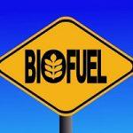 Biocombustibili, il futuro e' nelle alghe
