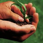 Agricoltura 'blu', il caso vincente del Veneto: produrre il massimo col minimo sforzo