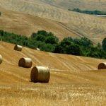 Diritto al cibo/3 Agricoltura vuol dire economia reale, ma non assenza di speculazione