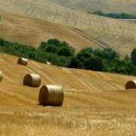 I giovani e l' agricoltura. Crescono le iscrizioni in agraria, ma manca la terra
