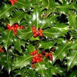 Alberi di Natale: ecco qualche consiglio per una scelta verde