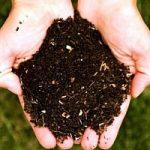 L'agricoltura del futuro e' sociale: promette lavoro, reddito e tutela dell'ambiente