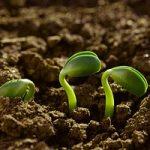 Agroecologia, una prospettiva per salvare il mondo