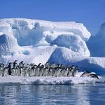 Pinguino imperatore, popolazione raddoppiata