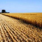 Consorzi agrari/2 Federconsorzi e' ricca, mentre l'agricoltura e' sempre piu' povera. L'inchiesta di...