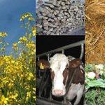 Energia, sempre piu' sfruttate le biomasse. La Finlandia e' la prima nella Ue