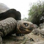 Addio Georges, l'ultima tartaruga gigante se ne va. E si estingue tutta la razza
