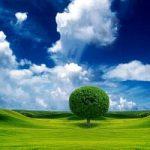 Ambiente, Terna presenta il rapporto di sostenibilita'