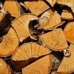 Energia, quale futuro per le biomasse in Italia?