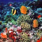 Scienziati a difesa della barriera corallina, contro carbone in Australia