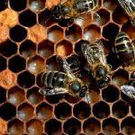 Meno api e meno miele. Colpa di pesticidi e maltempo