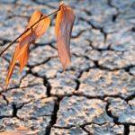 Agricoltura in difficoltà per il caldo record a giugno
