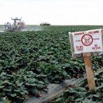 Agricoltura biologica. Più efficenza, meno fertilizzanti e meno Co2