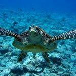 Costa Rica, tartarughe marine a rischio estinzione