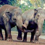 Elefanti, rinoceronti e tigri a rischio estinzione