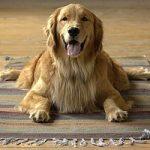 Dog-Yoga: anche i cani possono fare yoga