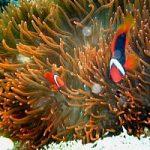Barriera Corallina: un viaggio a portata di tutti, grazie a Google