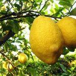 Il limone e' il rimedio contro i calcoli renali