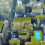 I tetti verdi come soluzione al calore delle citta' e alla crisi