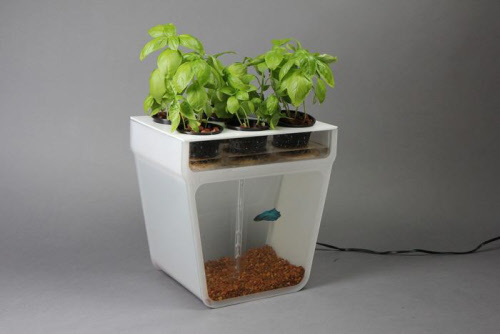 home-aquaponics-kit