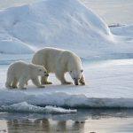 L'Artico e' una pompa di calore. Pericolo per i livelli del mare