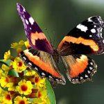 Produrre energia pulita, grazie alle ali di farfalla