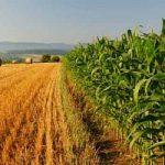 L'agricoltura come antidoto alla fame nel mondo