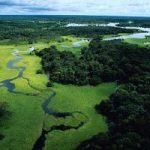Recupero della foresta Amazzonica: piantati 2 milioni di alberi