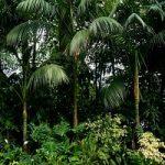 In Amazzonia alberi piu' forti dei cambiamenti climatici