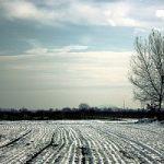 Italia sotto la morsa del gelo: rischio per l'agricoltura