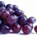 Ecoinvenzioni, il forno che produce elettricità con le bucce d'uva
