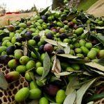 Stop ad olio con passamontagna: un progetto svela falso made in Italy