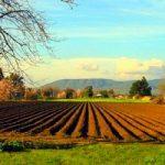 Agricoltura: crescita zero nel 2012. Aumentano i costi di produzione