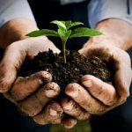 Speciale elezioni/ Ambiente, energia ed agricoltura. Programmi politici a confronto