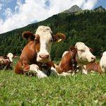 Agricoltura green: nascono nuove figure professionali