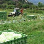 Agricoltura, in crescita le coltivazioni biologiche