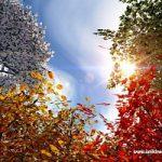 L'effetto serra cancella le stagioni