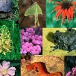 La biodiversita' si racconta sul web