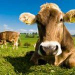 Da scarti agricoli ad energia, le rinnovabili del futuro