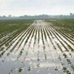 Agricoltura a rischio, a causa del clima impazzito