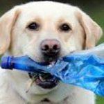 I cani sono i migliori amici dell'ambiente