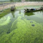 Usa: scoperta una nuova area per produrre biocarburante